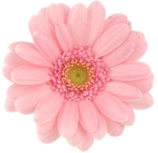 pink-flower-02